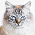 Domestic cat ice cold s look Stock Images