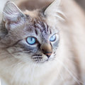Domestic cat ice cold s look Royalty Free Stock Photos