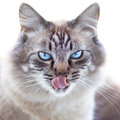 Domestic cat ice cold s look Stock Photos