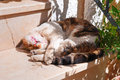 Domestic cat. Royalty Free Stock Photo