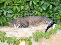 Domestic cat sleeping on the fence Stock Photo