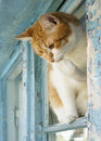 Domestic cat at the window cat face amazement with a sitting on blue shabby holding a paw Stock Photography