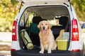 Domestic dog in car trunk sitting the Stock Photos