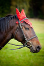 Domestic horse Royalty Free Stock Photo