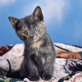 Domestic kittens a gray kitten sittingon a blanket and looking very sad studio shot aginst a fake blue sky background Stock Photo