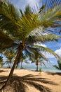 Dominican Republic, Punta Cana Royalty Free Stock Photo
