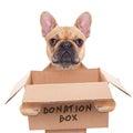 Donation box dog Royalty Free Stock Photo
