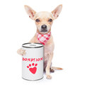 Donation dog chihuahua with a can collecting money for charity isolated on white background Royalty Free Stock Images