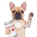 Donation dog Royalty Free Stock Photo
