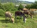 Donkey 05 Stock Photos