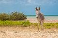 Donkey Beside The Beach