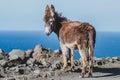 Donkey On The Beach