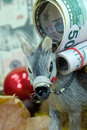 Donkey with big money - a christmas scene Stock Photography