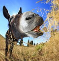 Donkey at breakfast eating grass on island of dugi otok in adriatic sea dalmatia croatia Royalty Free Stock Photos