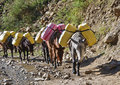 Donkey caravan in mountains of Nepal Royalty Free Stock Image