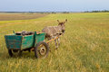 Donkey cart Royalty Free Stock Image
