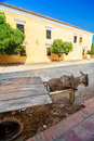 Donkey Cart and Building Royalty Free Stock Photo