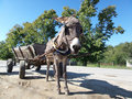 Donkey and cart Royalty Free Stock Photo