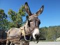 Donkey and cart Royalty Free Stock Photo