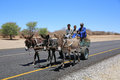 Donkey cart traditional on the highway in botswana africa Stock Images