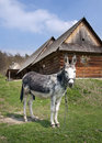 Donkey in countryside Royalty Free Stock Photos