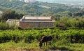 Donkey on countryside landscape, Crete, Greece Royalty Free Stock Photo