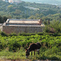 A donkey on a countryside landscape, Crete, Greece Royalty Free Stock Photo
