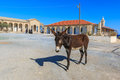 Donkey on Cyprus Royalty Free Stock Photo