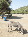 Donkey in a donkey sanctuary island off the turkish aegean coast Stock Image