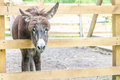 Donkey on farm, wooden fence Royalty Free Stock Photo