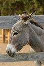 Donkey by the fence Royalty Free Stock Photo