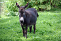 Donkey in a field Royalty Free Stock Photography