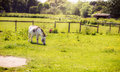 Donkey grazing on a green field Royalty Free Stock Photo