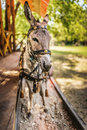 Donkey in harness carries wooden sleepers trailer with children Royalty Free Stock Photography