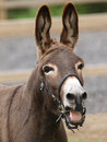 Donkey Head shot Royalty Free Stock Images