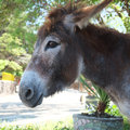 Donkey the image of a Stock Photos