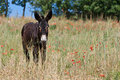 Donkey in Italy Stock Photography