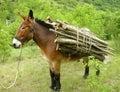 Donkey with load Royalty Free Stock Photo