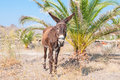 Donkey lone tethered in a field Royalty Free Stock Photos