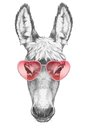 Donkey in Love! Portrait of Donkey with sunglasses. Royalty Free Stock Photo