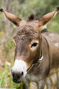 Donkey on a meadow. Royalty Free Stock Images