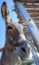 Donkey met in greece greece crete Royalty Free Stock Photography