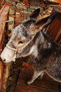 Donkey in the mountain village of Cyprus Stock Photography