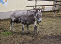 Donkey in a natural farm Stock Photos