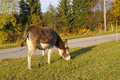 Donkey a in a pasture Stock Images