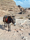 Donkey - Petra,Jordan Royalty Free Stock Photo