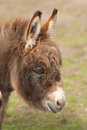 Donkey portrait Royalty Free Stock Photo