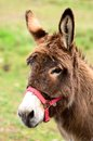 Donkey portrait very cute waiting for tourists catalunya france Royalty Free Stock Photos