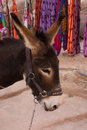 Donkey at Souvenir Stand