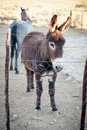 Donkey a stands in a paddock behind a wire fence with a horse behind it Royalty Free Stock Images